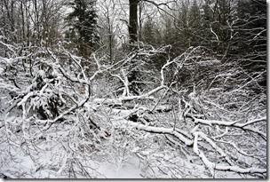 Rothaarsteig Spur Wisent-Pfad - umgefallene Bäume