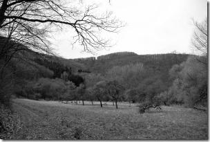 Moselsteig Seitensprung Borjer Ortsbachpädche - im Baybachtal