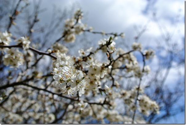Traumpfad Nette-Schieferpfad - Blüten