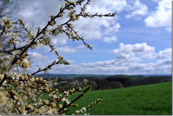 Traumpfad Nette-Schieferpfad - Himmel und Blüten