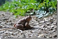 Traumschleife Murscher Eselsche - Krötenwanderung