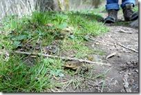 Traumschleife Murscher Eselsche - Kröten, wohin man schaut