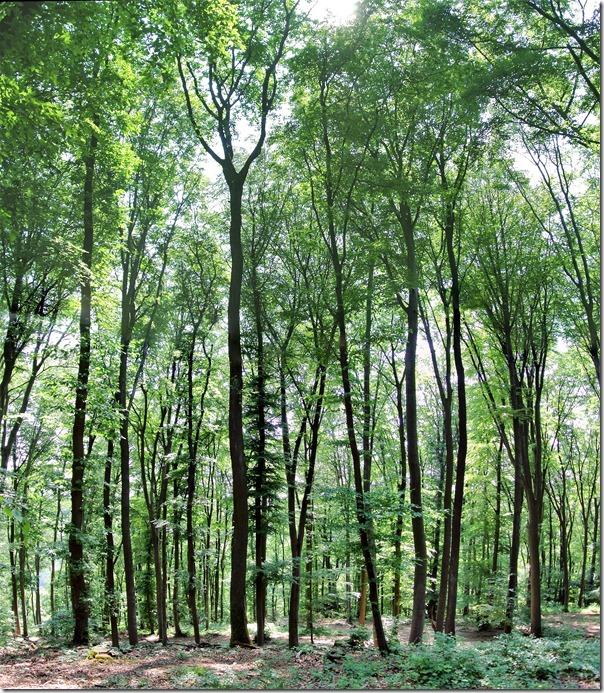Himmelsleiter Brohl-Lützing - Wald