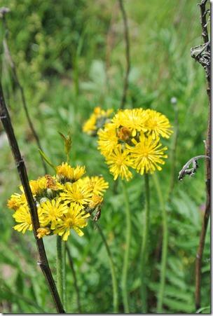 Himmelsleiter Brohl-Lützing - Biene und Blume