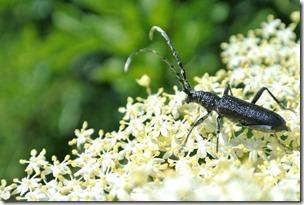 Himmelsleiter Brohl-Lützing - Käfer