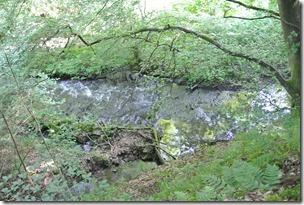 Traumpfad Waldschluchtenweg - Hillscheider Bach