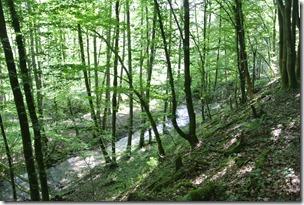 Traumpfad Waldschluchtenweg - Blick auf den Bach