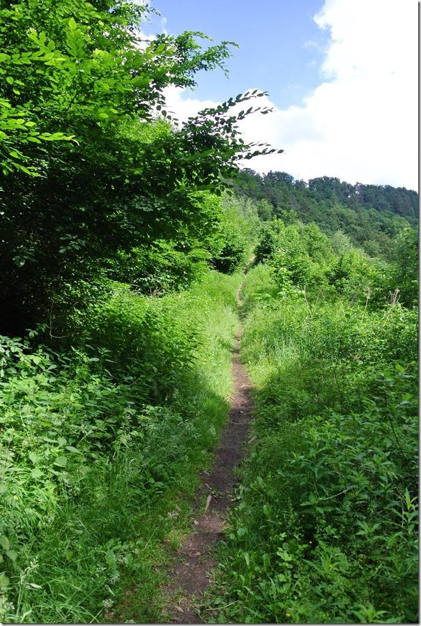 Traumpfad Waldschluchtenweg - Pfad im Wald