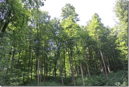 Traumpfad Waldschluchtenweg - Waldimpressionen