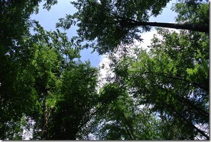 Traumpfad Waldschluchtenweg - Baumwipfel