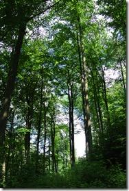 Traumpfad Waldschluchtenweg - Wald, Wald, Wald