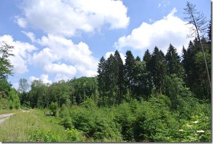 Traumpfad Waldschluchtenweg - Blauer Himmel und Wald