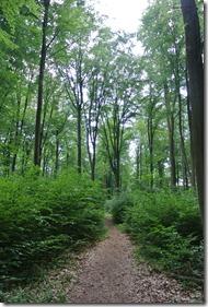 Traumpfad Waldschluchtenweg - Weg durch den Wald