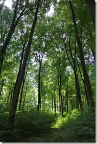 Traumpfad Waldschluchtenweg - Lichtspiel im Wald