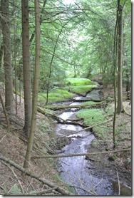 Traumpfad Waldschluchtenweg - Bachlauf im Wald