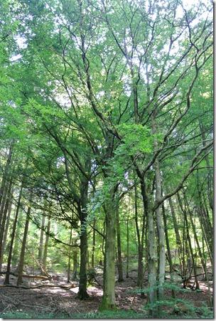 Traumpfad Hochbermeler - Wald