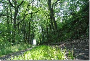 Traumpfad Hochbermeler - Waldweg