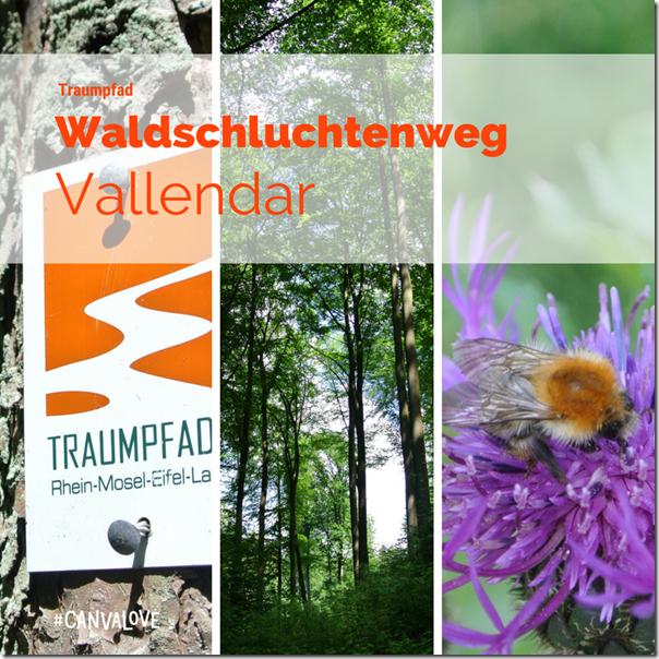 Traumpfad Waldschluchtenweg - Teaser