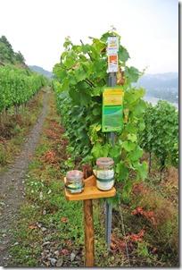 Traumpfad Hatzenporter Laysteig - Weg durch die Weinreben