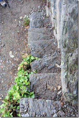 Traumpfad Hatzenporter Laysteig - Treppe in den Weinlagen