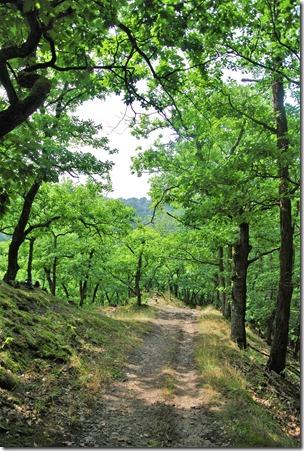 Traumpfad Hatzenporter Laysteig - Abstieg im Wald