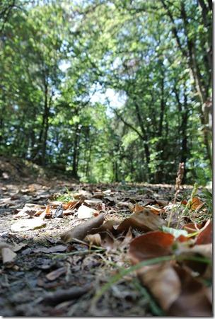 Traumpfädchen Langscheider Wacholderblick - Waldweg