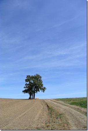 Traumpfädchen Paradiesweg - Einsamer Baum