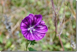 Traumpfädchen Paradiesweg - Blume
