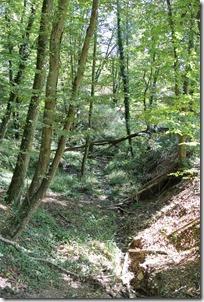 Traumpfädchen Löfer Rabenlaypfad - Waldweg